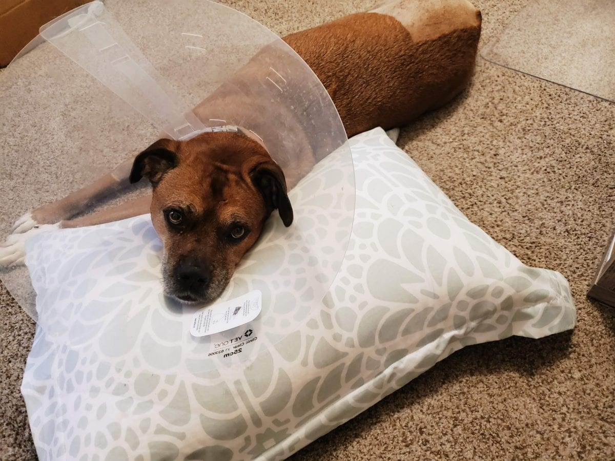 Lanabear - the cone flower